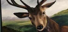 cropped image of deer