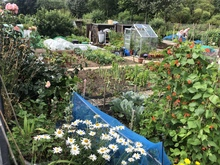 Stonehaven's allotments abounding in produce