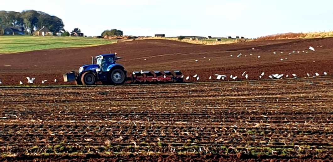 Tractor ploughing autumn field with seagulls following